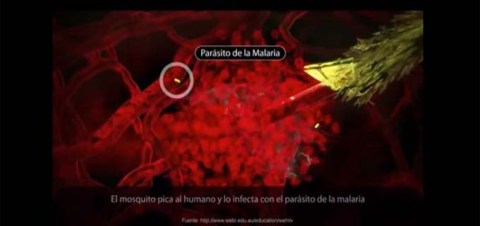 Malaria, the Story of a Vaccine (Complete Version)