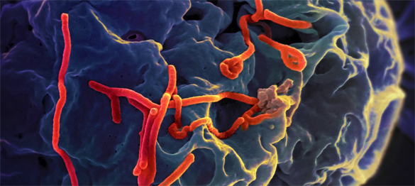 The Three Crises of Ebola: Updated Report