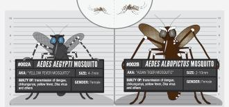 Usual suspects: 002 Aedes Mosquito