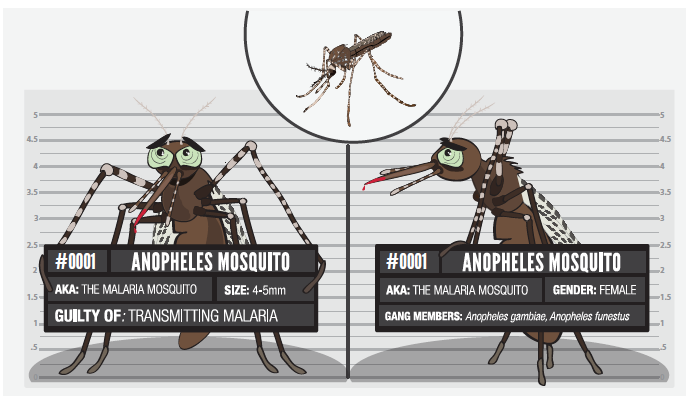 Usual Suspects: 001 Anopheles Mosquito