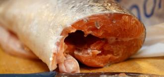 Childhood Obesity, Rapid Growth Linked to Pregnant Moms Eating Lots of Fish
