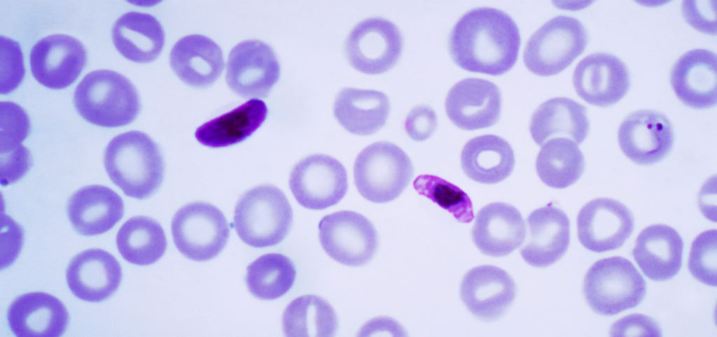 The Activation or Silencing of Certain Genes Helps Malaria Parasites Adapt to Different Environmental Conditions