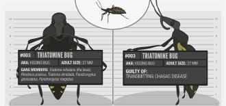 Usual suspect 003: Triatomine bug