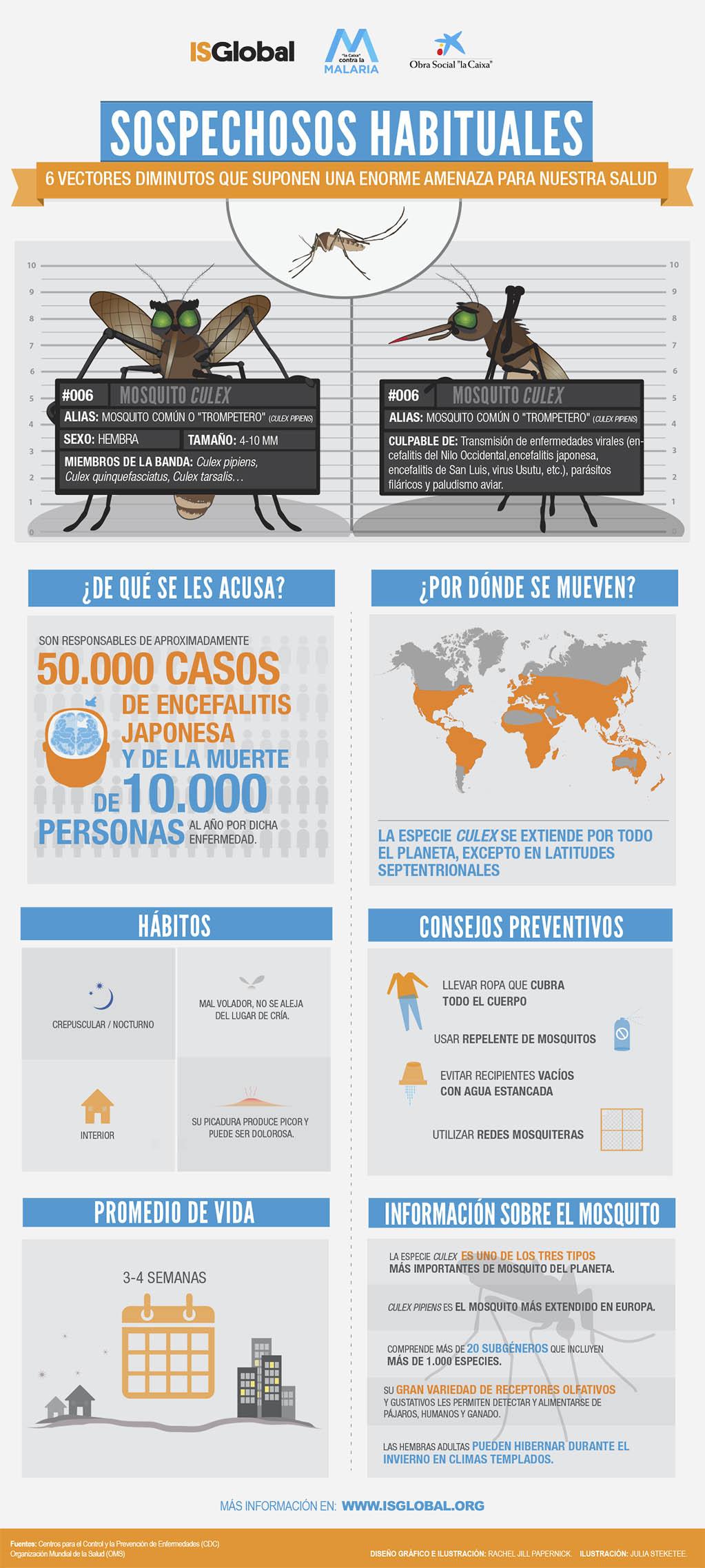 Infografía sobre el mosquito del género Culex, vector de enfermedades como la encefalitis japonesa