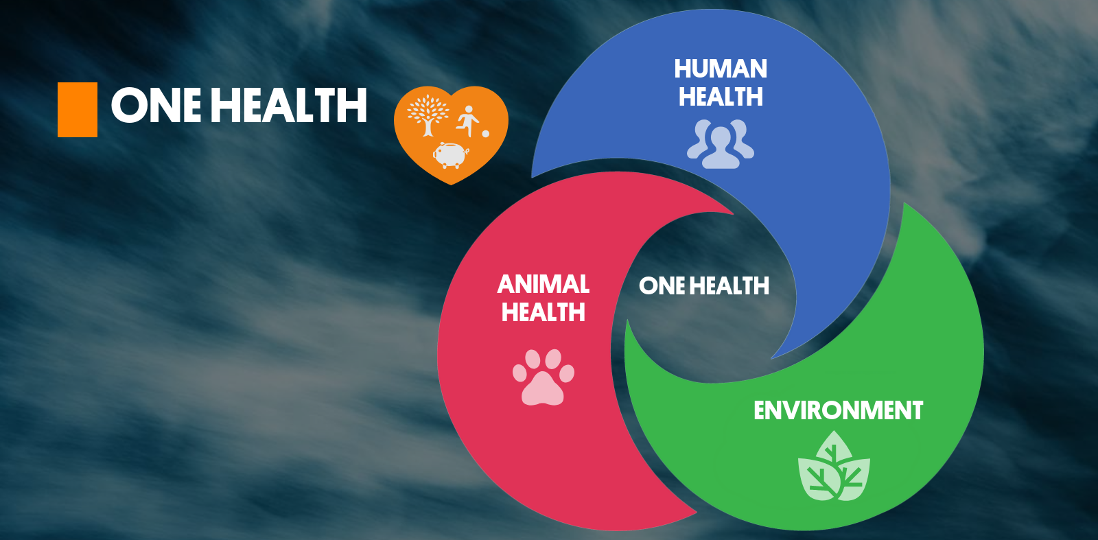 Everyday Health: Trusted Medical Information, Expert Health Advice, News,  Tools, and Resources - Everyday Health